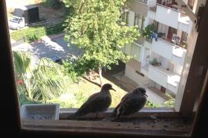 740 Kuşları