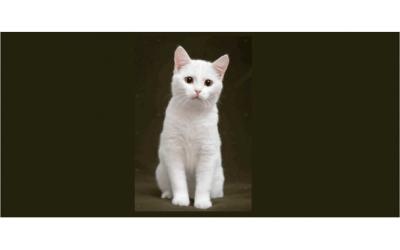 Bir Kedim Bile Yok